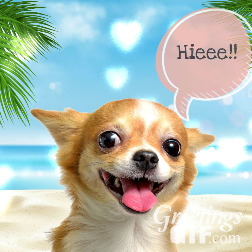 Cute Hi Message Image