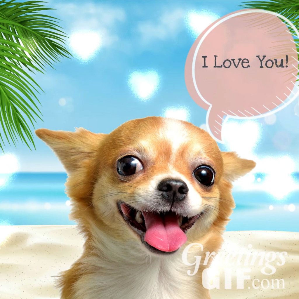 Cute I Love You Message Image
